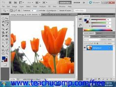 Photoshop Tutorial Using Channels and Masking Lesson Group Employee Training Photoshop Cs5 Tutorials, Adobe Photoshop, Lightroom, Paint Buckets, Photography Sites, Alpha Channel, Painting Tools, Great Shots, Creative Inspiration