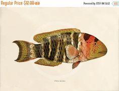GEZELLIG DECEMBER VERKOOP antieke vis Art Print  door 1001treasures