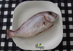 El pargo, un pescado sabroso, carnívoro y hermafrodita