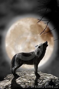 A wolf howling to the full moon
