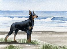 DOBERMAN PINSCHER At The Beach Dog Art Print by k9artgallery, $12.50