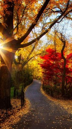 Autumn Park with Trees, Light & foliage Fall Pictures, Pretty Pictures, Autumn Photos, Fall Images, Beautiful World, Beautiful Places, Simply Beautiful, Beautiful Artwork, Autumn Morning