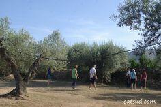 Visita a finques d'oliveres