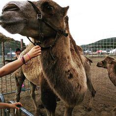 Kam na výlet s dětmi? Podívejte se na 15 tipů, kam vzít děti i celou rodinu a společně strávíte nějaký ten čas a děti se nebudou nudit. Camel, Zoo, Around The Worlds, Teen, Animals, Instagram, Animales, Animaux, Camels