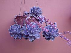 echeveria perle von nurnberg, via Flickr.