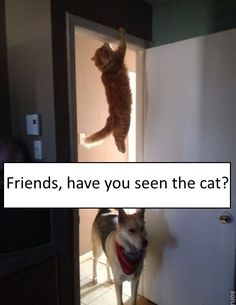 Friends, have you seen the cat?