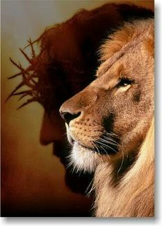 Jessica Feuerstein - Face to the ground - There is Power in the Name of Jesus to Break Every Chain! Lion Images, Lion Pictures, Jesus Pictures, Jesus Wallpaper, Lion Wallpaper, Jesus Christ Images, Jesus Art, Lion Of Judah Jesus, Break Every Chain