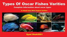 Types of Oscar fish and characters Hindi Urdu with . Animals Name In English, Goldfish Types, Fish Chart, Oscar Fish, Homer Alaska, Aglio Olio, Animal Worksheets, Potato Toppings, Fish Pie