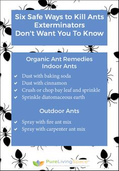 6 Safe Ways to Kill Ants Your Exterminator Doesn't Want You to Know