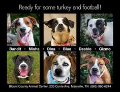 ADOPT A NEW BEST FRIEND! Blount County Animal Shelter... TENNESSEE https://www.facebook.com/BlountCountyAnimalCenter/photos/a.125906857471267.18393.125484514180168/982193308509280/?type=1&theater