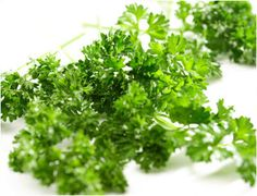 Rubbing parsley leaves on skin cures itching. Moreover, it helps fade freckles and skin spots when used about three times in a day. Application of parsley seed oil heals bruises. Those who are prone to bruising can keep parsley-packed ice cubes in the freezer.       • Applying a combination of parsley juice and lemon juice benefits in healing acne. In case of blackheads, you can boil some water and add fresh, chopped parsley, rosemary, mint and a few slices of lemon in it. Finally, use this…