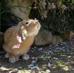 Awww lol animals haha cute adorable fluffy like animal lovely flower wow sweet bunny rabbit aww Cute Creatures, Beautiful Creatures, Animals Beautiful, Beautiful Images, Baby Bunnies, Cute Bunny, Bunny Rabbits, Bunny Pics, Baby Cows