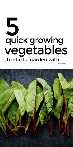 These five quick growing vegetables are the best vegetables to plant to start a vegetable garden fast. They are some of the very quickest growing vegetables you can sow and are easy for beginners to grow successfully in pots and containers in a small space or a new garden. #quickgrowingvegetables #fastgrowingvegetables #growingvegetables #vegetablegrowing #vegetablegarden Small Vegetable Gardens, Starting A Vegetable Garden, Vegetable Gardening, Organic Gardening, Nutrition Tips, Health And Nutrition, Diet Tips, Health Tips