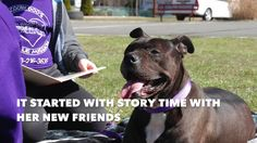 Not long ago one Sunday morning I received an email from SIACC asking me to pull a senior left behind. We drove out to meet her. Story Time, New Friends, Scooby Doo, Pitbulls, Animals, Animales, Animaux, Pit Bull, Animais