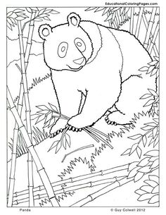 Panda Coloring Zoo Animals Cute Free Printables Realistic Animal Pages
