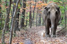 Bella became a well-known and much loved member of the sanctuary thanks to her special bond with one elephant named Tarra.