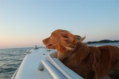 Dog Days of Summer -- a great boat ride is the life!