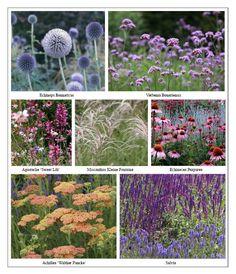 Ian Barker Gardens MIFGS Planting List Perennial garden – Famous Last Words Garden Inspiration, Plants, Garden Plants, Cottage Garden Plants, Perennial Garden, Perennials, Winter Garden, Garden Planning, Garden Landscaping