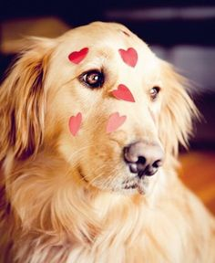 Happy Valentine's Day! To all my furry friends big and small you are loved at Debs Doggie DaySpa!