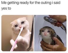 Funny cat memes so hilarious can't stop laughing. Super relatable cute memes that will make you love your furbaby even more. Animal Memes, Funny Animals, Cute Animals, Animal Quotes, Stupid Funny Memes, Funny Relatable Memes, True Memes, Funny Stuff, Funny Gifs