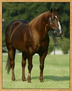 Miss N Cash - one of my all-time favorite horses and sire of Fire N Missiles (Roger).