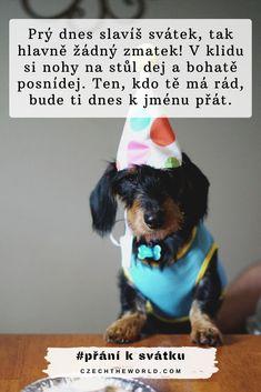 Velká sbírka nejlepších přání k svátku, která potěší každého! ✅ Pro kamarádku, spolužačku, tatínka či drahou polovičku. ✅ Veršovaná, krátká nebo vtipná... #prani #svatek #praniksvatku Birthday, Cards, Animals, Tatoo, Birthdays, Animales, Animaux, Animal, Maps
