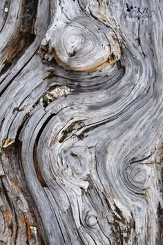 Patterns In Nature, Textures Patterns, Wood Bark, Composition Art, Organic Art, Wooden Textures, Principles Of Design, Abstract Nature, Ocean Photography