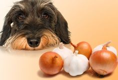 Dogs + Food =