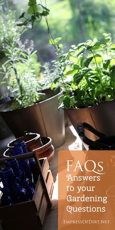 Helpful answers to your gardening questions - topics include basil, container gardening, attracting butterflies, understanding types of seeds, and getting started in gardening