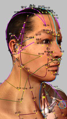 Acupressure Therapy, Acupressure Massage, Acupressure Treatment, Meridian Acupuncture, Acupuncture Points, Acupressure Points, Accupuncture, Gesicht Mapping, Cupping Massage