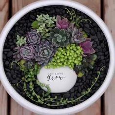 Succulent Bowls, Succulent Display, Succulent Gardening, Succulent Arrangements, Succulent Terrarium, Container Gardening, Succulent Ideas, Succulent Wreath, Indoor Gardening