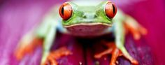 This image was taken in Costa Rica , it is a red eye tree frog on the pictures.