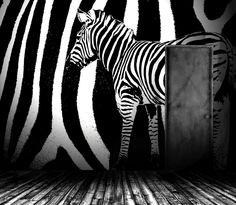 Zebra > Collezione Natural Instinct #wallpaper #mycollection #room #colour #design #home #office #living #zebra #black #white #natural