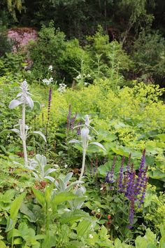 I planted this flowerbed last year. Alchemilla, salvia, stachys, echinops, rudbeckia, geraniums etc - Lindas trädgårdsblogg
