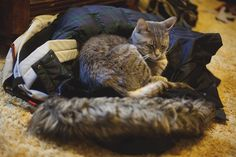 "Naps in Thomas' Jacket | Elise & Thomas | Couple Blog | Lifestyle & Photography | Blogging & Cats :: ""Facebook Twitter Google Pinterest StumbleUpon"" View the full post here: http://ift.tt/1Nbpy3u"