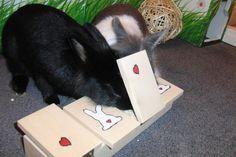 Katze: Spielzeug - Spielzeug für Kaninchen und Meerschweinchen - ein Designerstück von Plueschnasen bei DaWanda