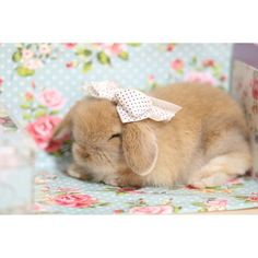 Image de bow, pink, and bunny