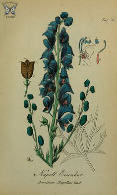 Wolfsbane. Aconitum napellus. Sammtlich Giftgewache Deutschlands (1854) | by Swallowtail Garden Seeds