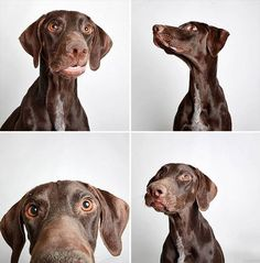 Look At These Dogs In Photo Booth-Style Pictures