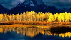 Autumn Forest in Sunshine