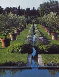 Allee of potted olives gives Mediterranean mood (Garden - Dominique Lafourcade).