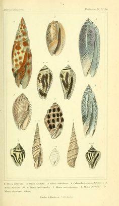 The Animal Kingdom, Cuvier, Latreille,  McMurtie, 1834.