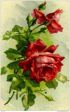 Roses ~ Art by Catherine Klein                                                                                                                                                     Más