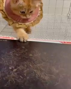 Funny Cute Cats, Cute Baby Cats, Cute Little Animals, Cute Cats And Kittens, Cute Funny Animals, Cute Animal Videos, Funny Animal Pictures, Tier Fotos, Funny Cat Videos