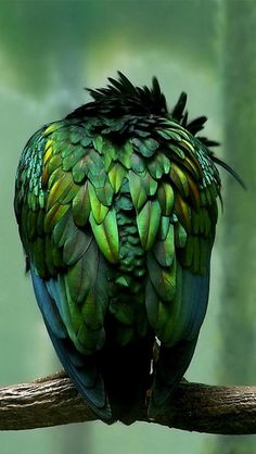 beautiful iridescence
