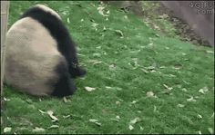 For animated GIFs, Deploy the Pandaball! [video]
