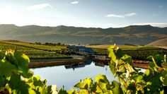Creation Vineyards - TRAVEL SOUTH AFRICA ON R320 THE FAMED HERMANUS WINE ROUTE