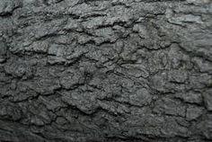 Bark - rough texture on a tree