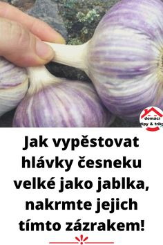 Cabbage, Vegetables, Gardening, Milan, Plants, Lawn And Garden, Cabbages, Vegetable Recipes, Brussels Sprouts