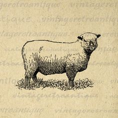 Printable Image Sheep Download Illustration Digital Farm Animal Graphic Antique Clip Art for Transfers etc HQ 300dpi No.3156